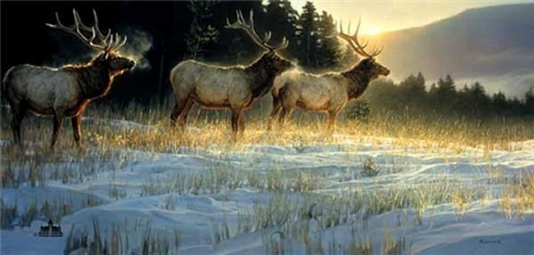 Nancy Glazier Nancy Glazier Limited Edition Giclee on Canvas Elk Ridge