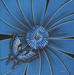 Godard Martini Art Limited Edition Giclee on Canvas Blue Butterfly (AP)