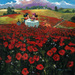 Limited Edition Giclee on Canvas Red Poppies